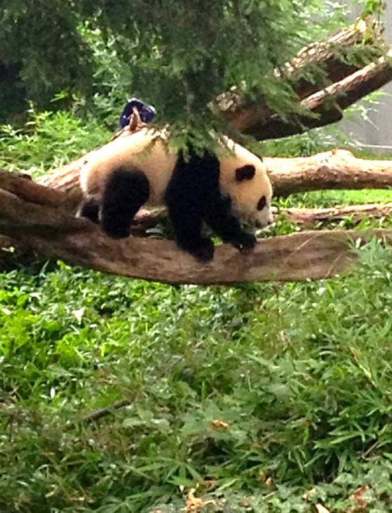 Baby Bao-Bao